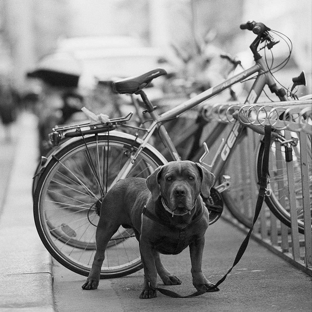 Fahrradpass schützt dein Bike aktive vor Fahrraddiebstahl