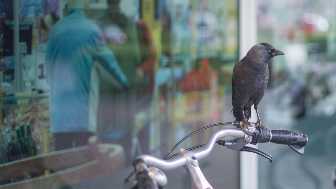 Fahrrad-Foto zum Fahrradpass hochladen - So gehts nicht!
